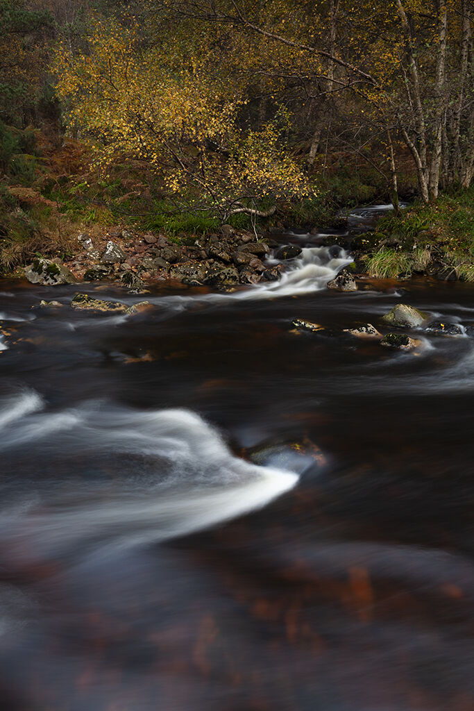 autumn at the water of feugh