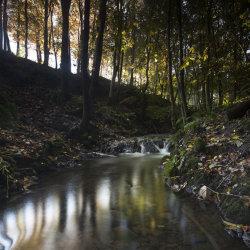 autumn burn, dunnottar woods