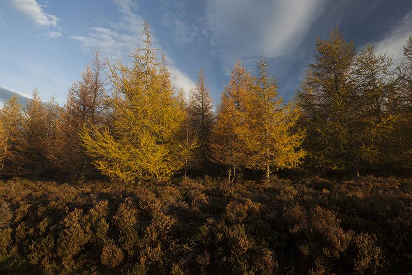 autumn colours, glen dye