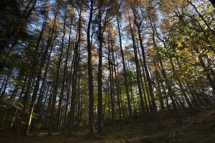 autumn colours, tollohill woods