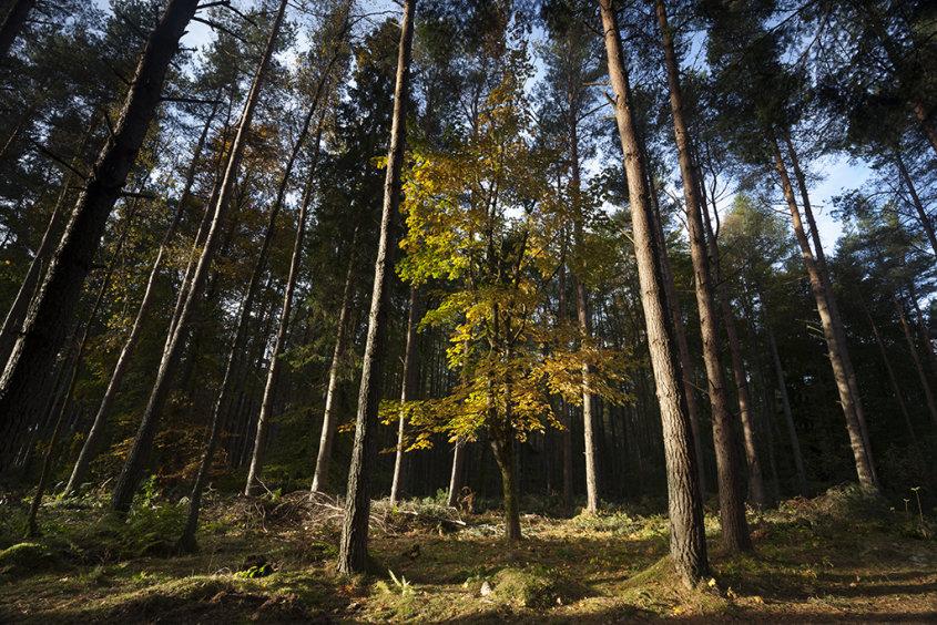 autumn in crathes woods