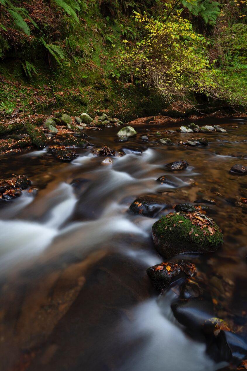 autumn in the den of alyth