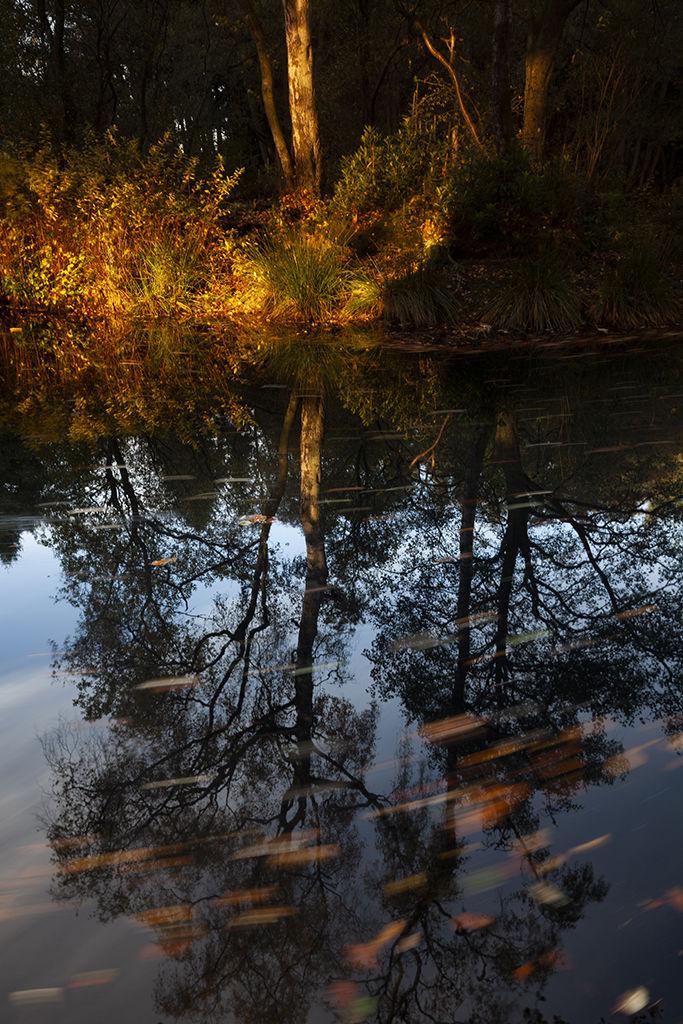 autumn reflections, aden lake