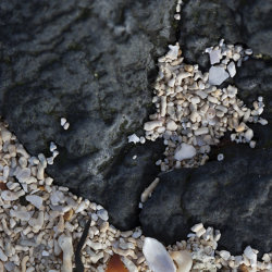 black rock, coral beach