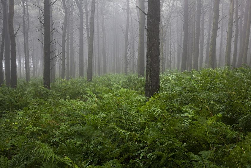 cheynehill woods