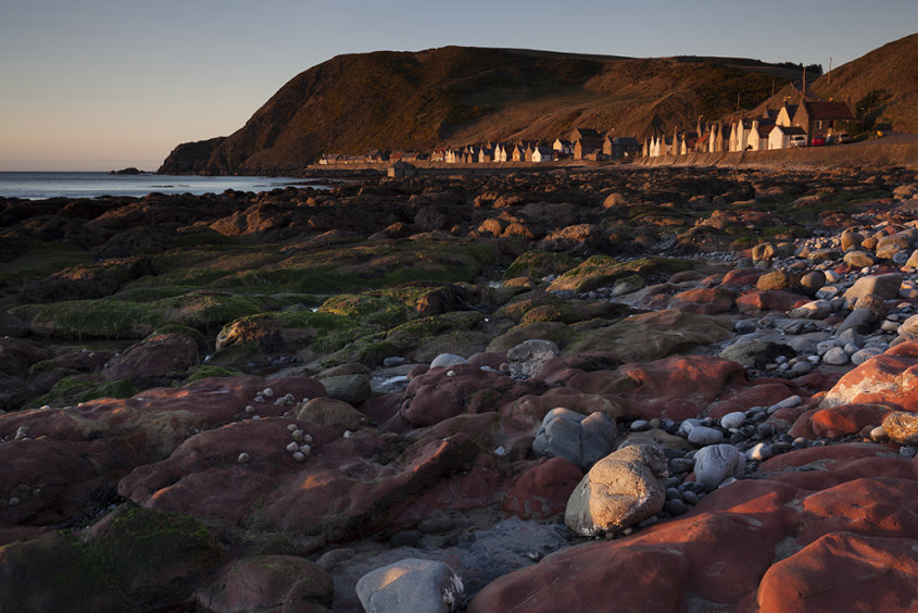 crovie in the setting sun