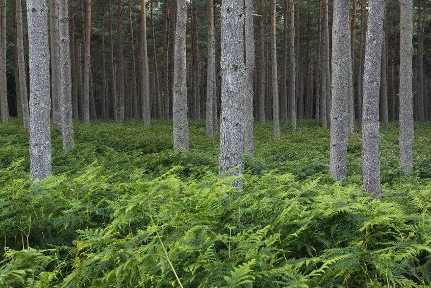 dalbeathie woods