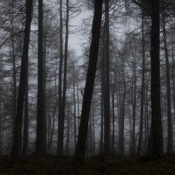 dark mist, tollohill woods