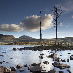 dead trees, loch assynt
