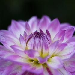 delicate colours