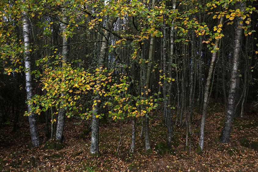 denlethen woods
