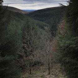 drumtochty woods