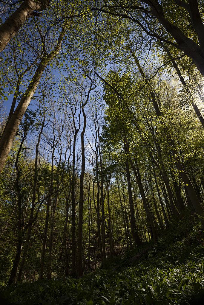 dunnottar woods
