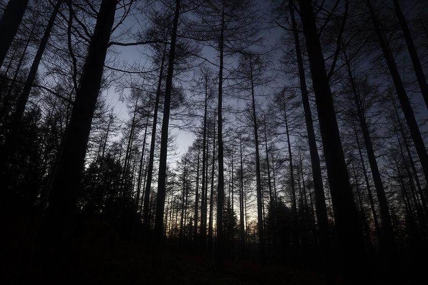 durris forest twilight