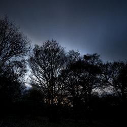 dusk trees, drumoak