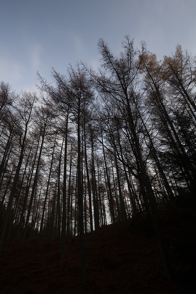 evening glow, kirkhill forest
