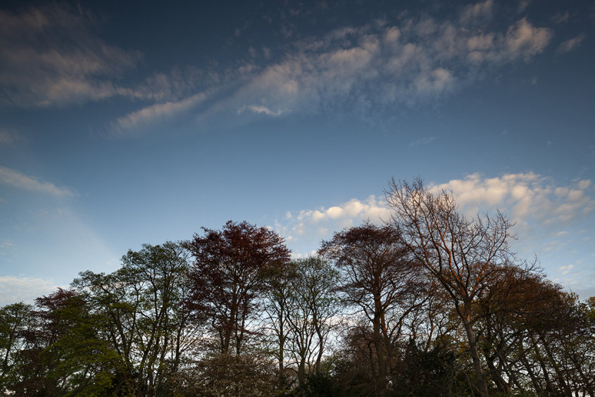 evening light, duthie park