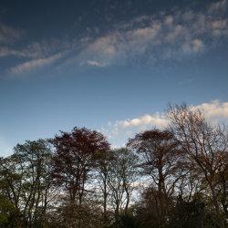 evening light, duthie park