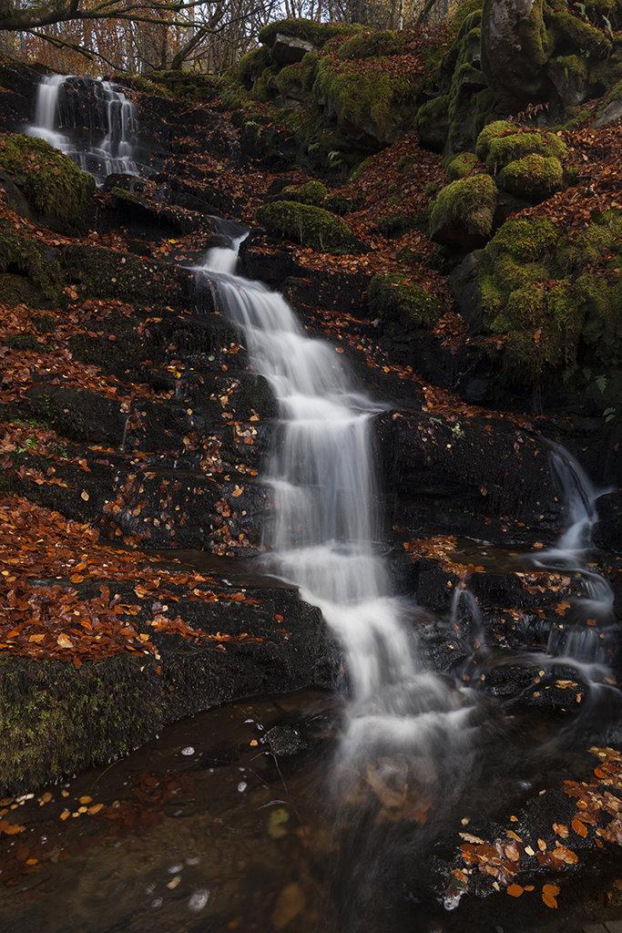 fals in autumn