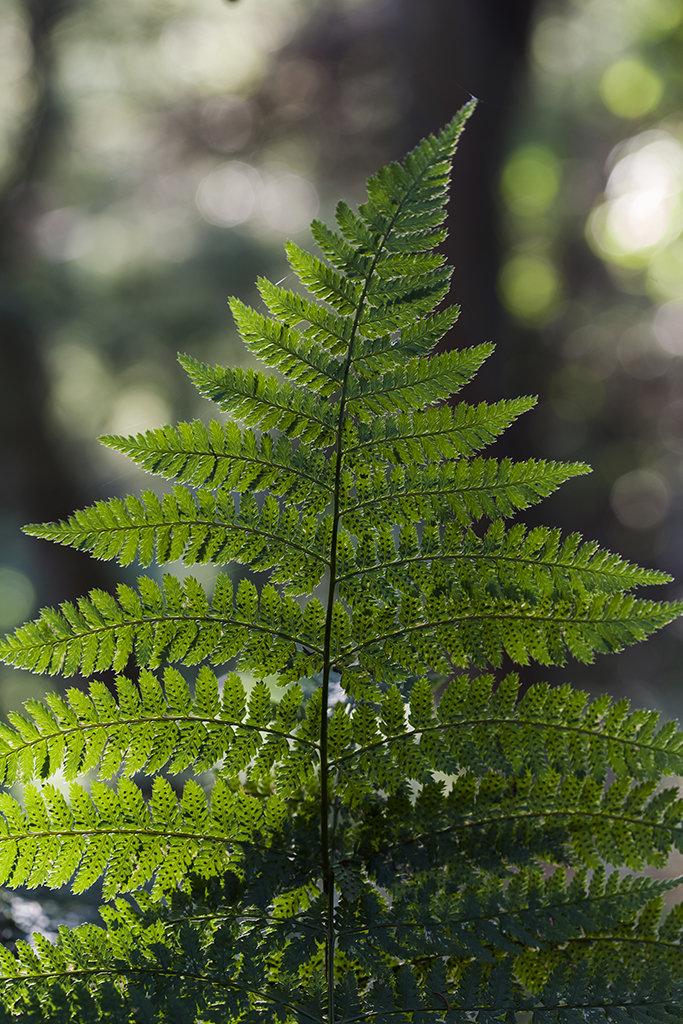 fern, delgaty woods