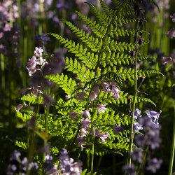 fern in the flowers