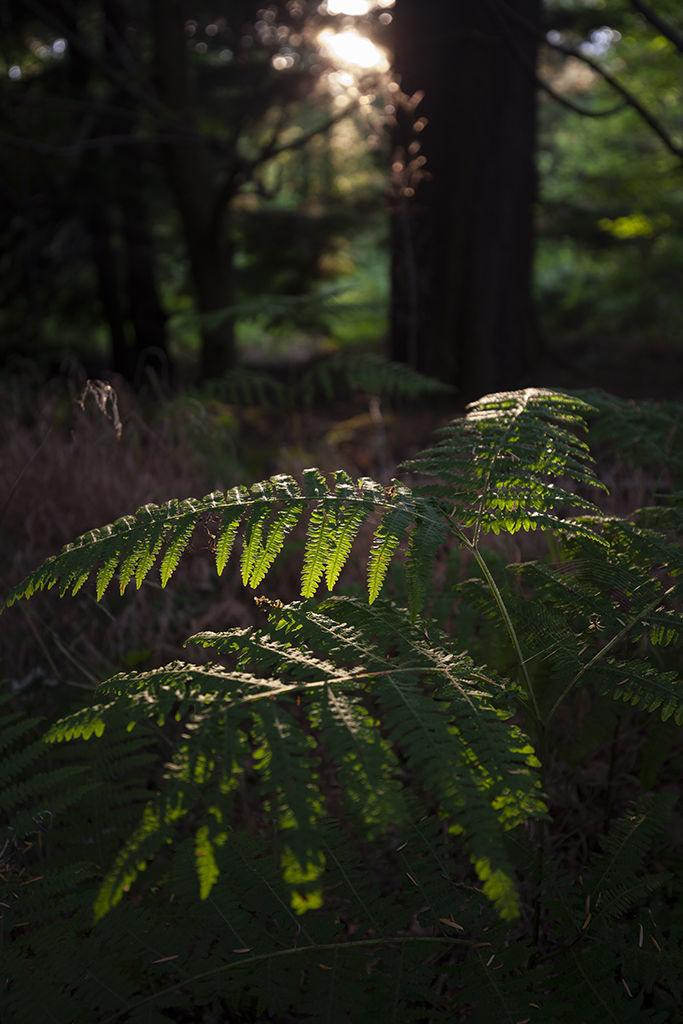 fern in the light