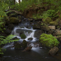 flowing through the forest
