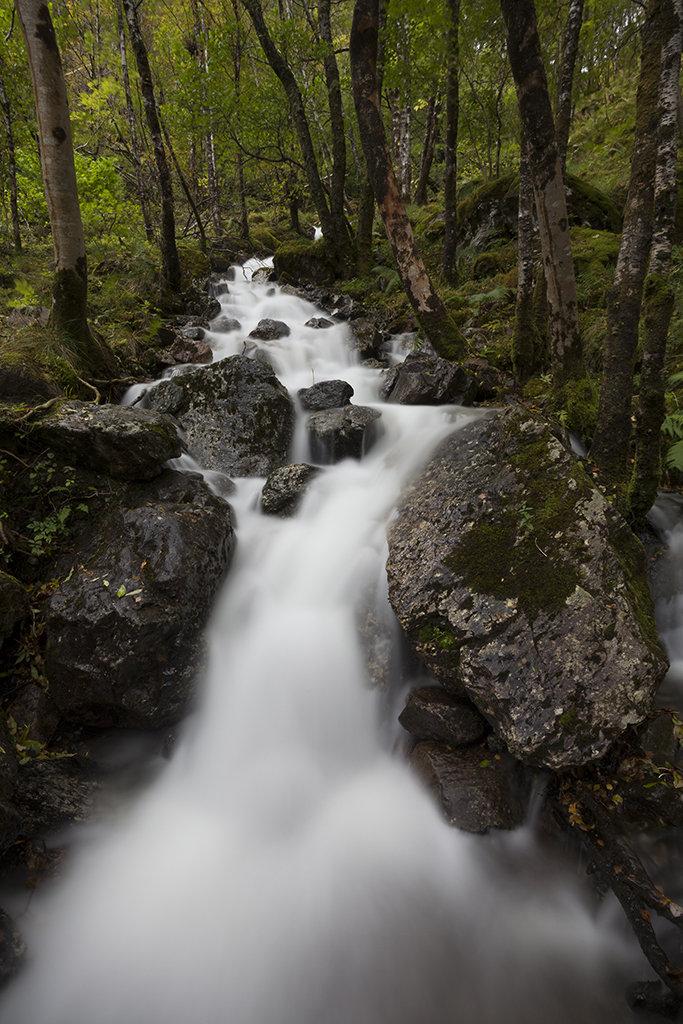 forest flow,glen nevis