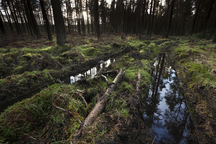 forest reflection, drumoak