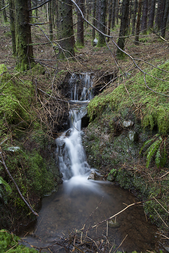 glen brittle forest