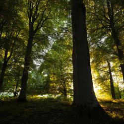 golden hour in the woods