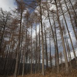 inverleal forest