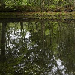 lake reflection, aden park