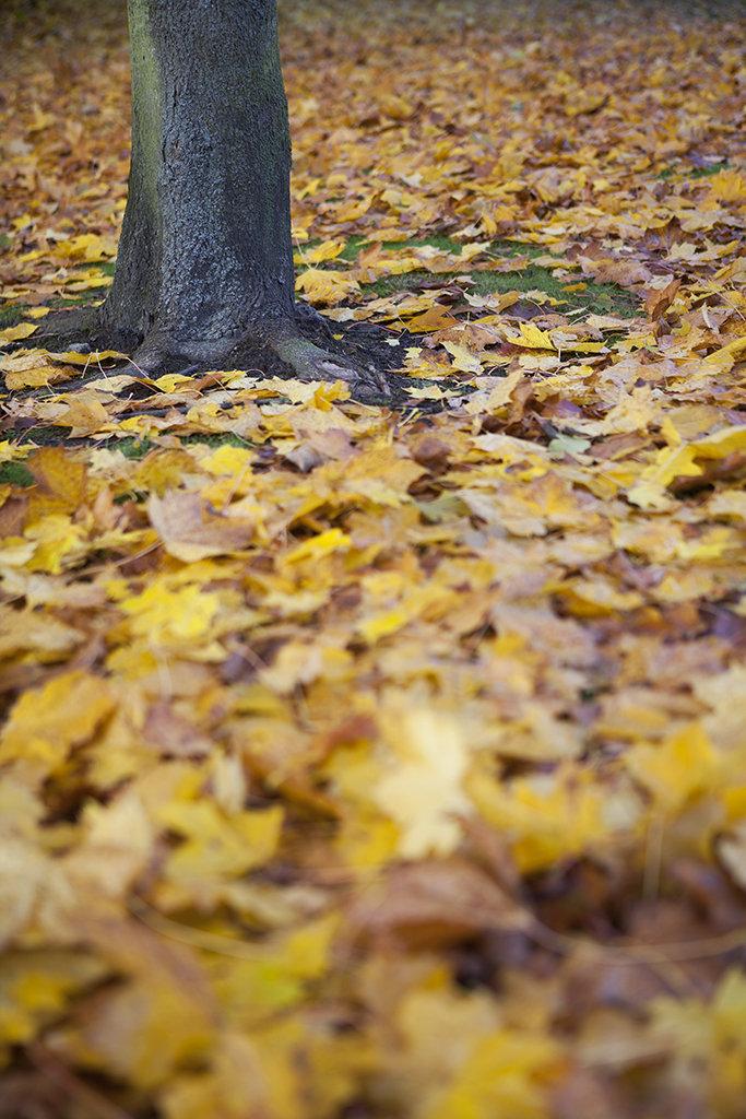 leaf litter (2)