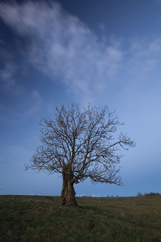 lone tree, braes of gight