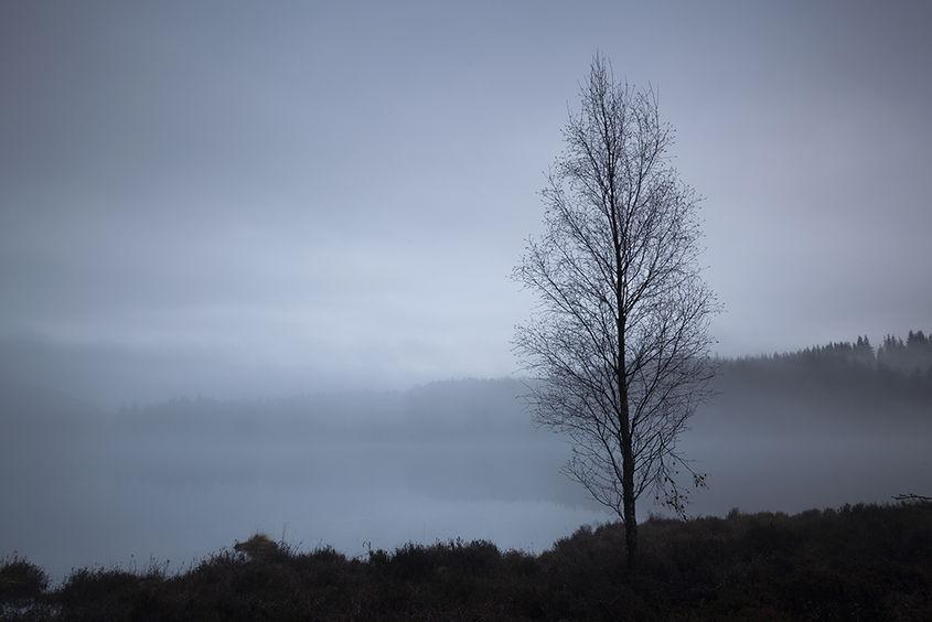 lone tree by rotmell loch