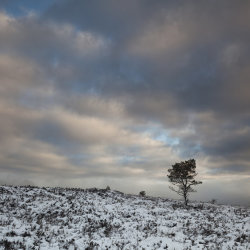 lone tree, millstone hill