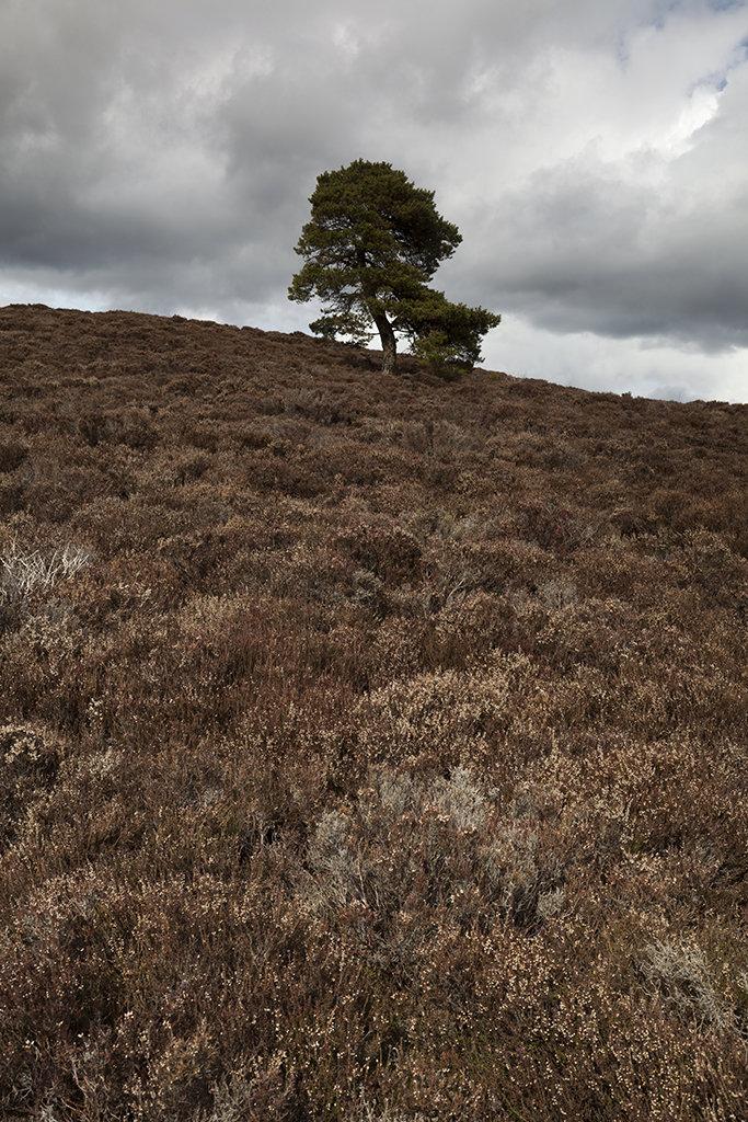 lone tree, scolty hill