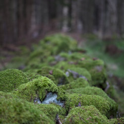 moss covered wall, scotty woods