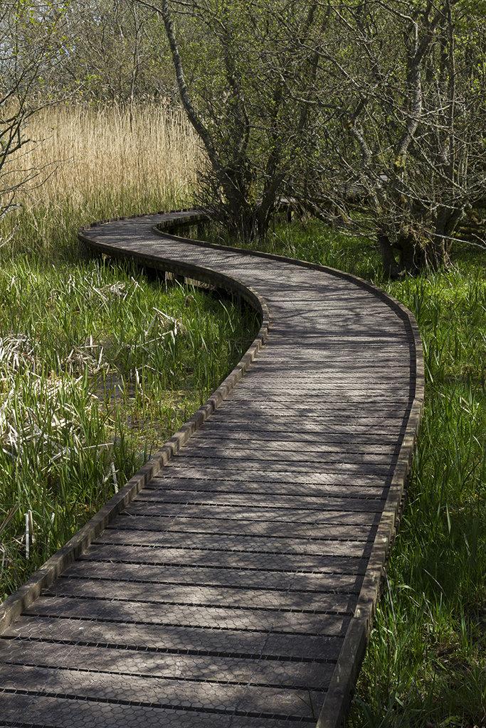 path, loch of kinordy