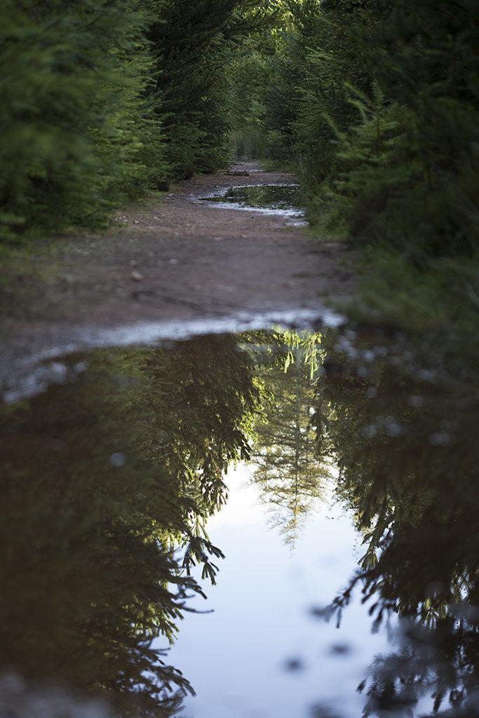 path through delgaty woods
