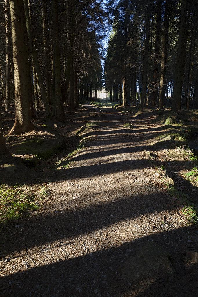 path through the bin forest