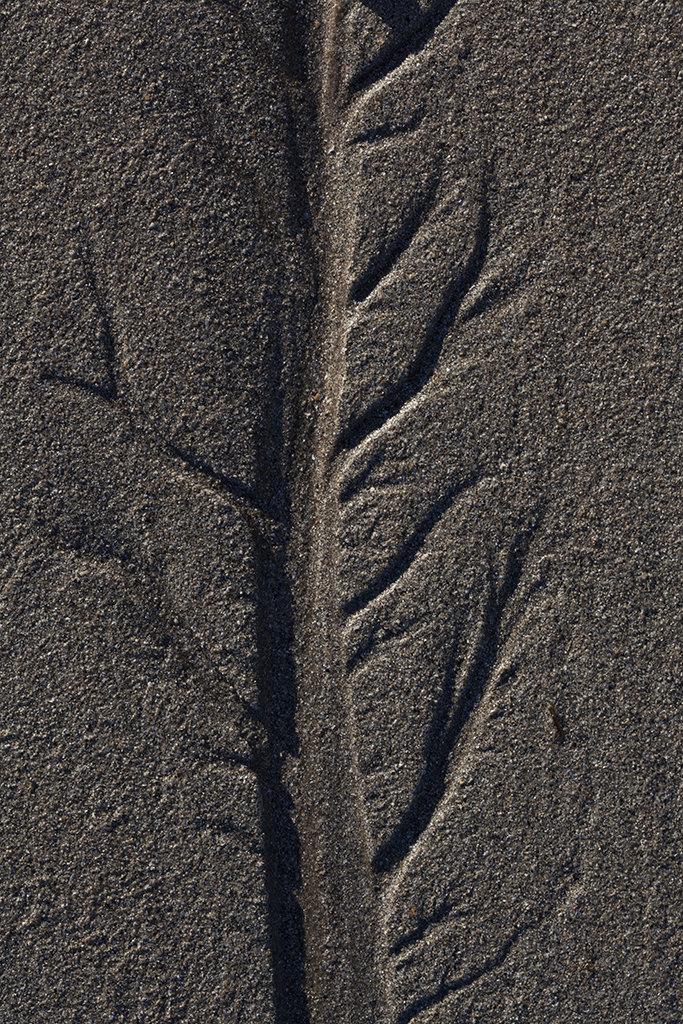 pattern, craighead beach