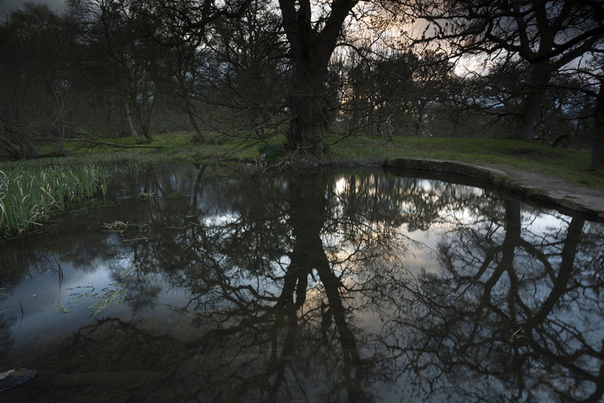 pond reflections, drumoak