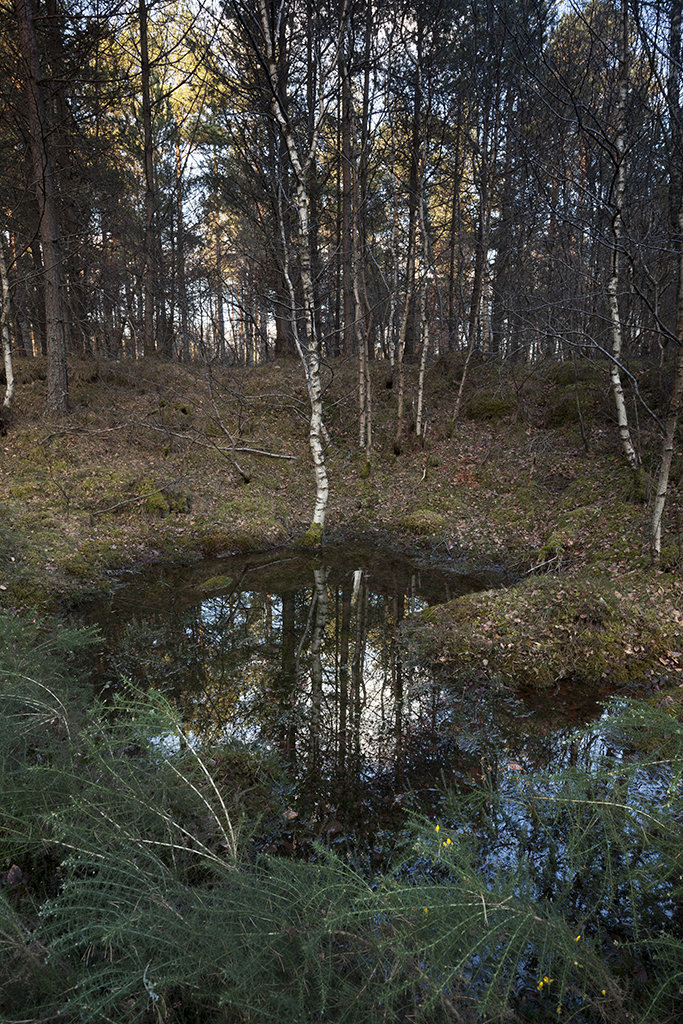 potarch woodland