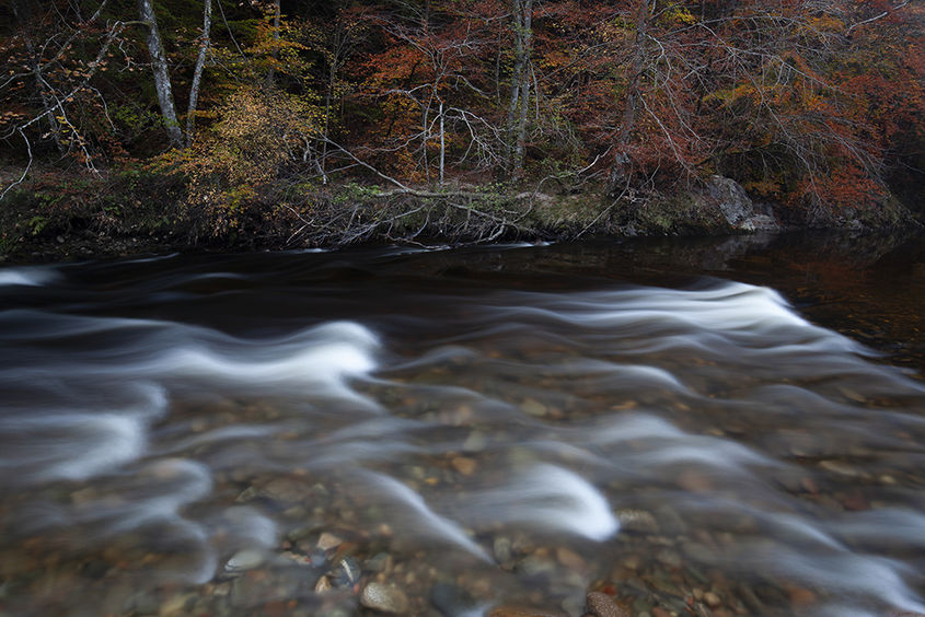 red leaves and white water