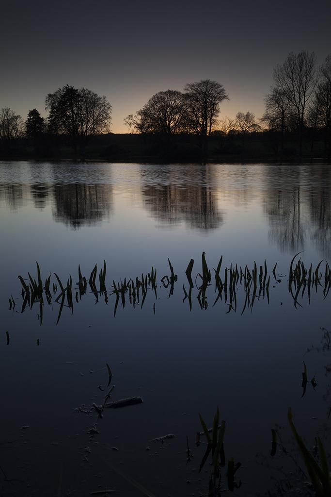 reeds, loch of fyvie