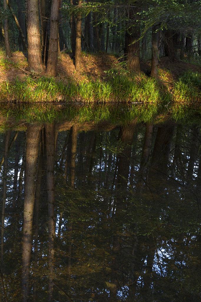 reflections, birsemore loch