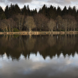 reflections, pitfour loch