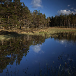 reflections, witchock loch